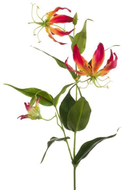 Coco Maison - gloriosa spray - 75 cm