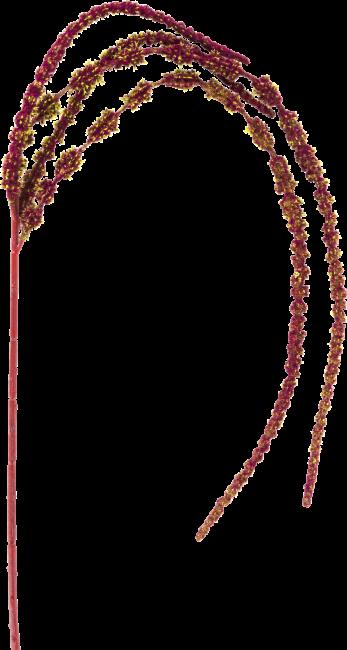 Coco Maison - amaranthus spray - 110 cm