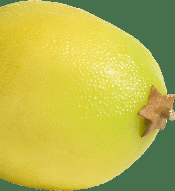 Coco Maison - lemon - 6 cm