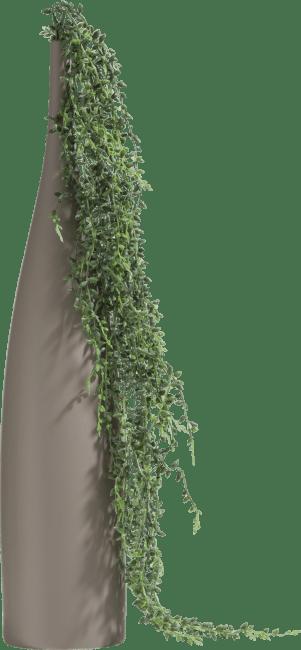 Coco Maison - senecio hanging vine - 95 cm
