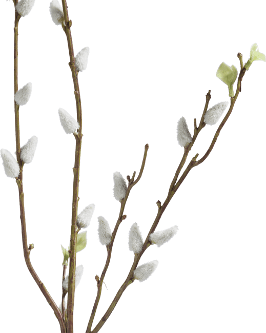 Coco Maison - pussy willow spray - 95 cm