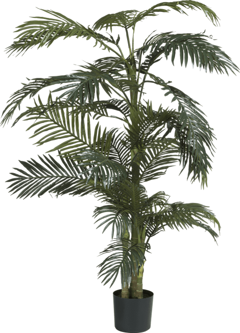 Coco Maison - palm areca - 170 cm