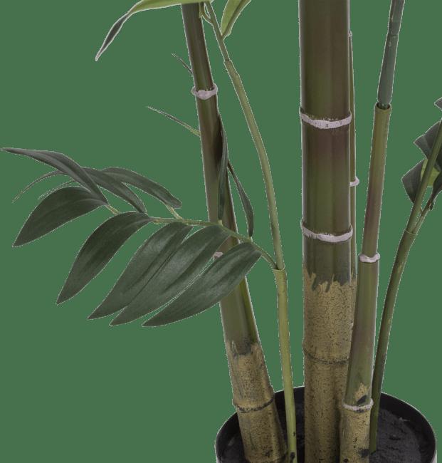 XOOON - Coco Maison - kentia palm plant h210cm