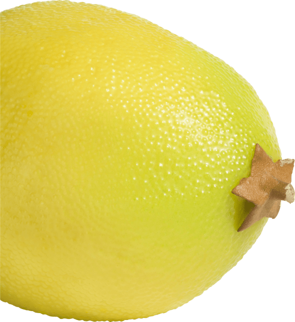 XOOON - Coco Maison - lemon artificial fruit h6cm