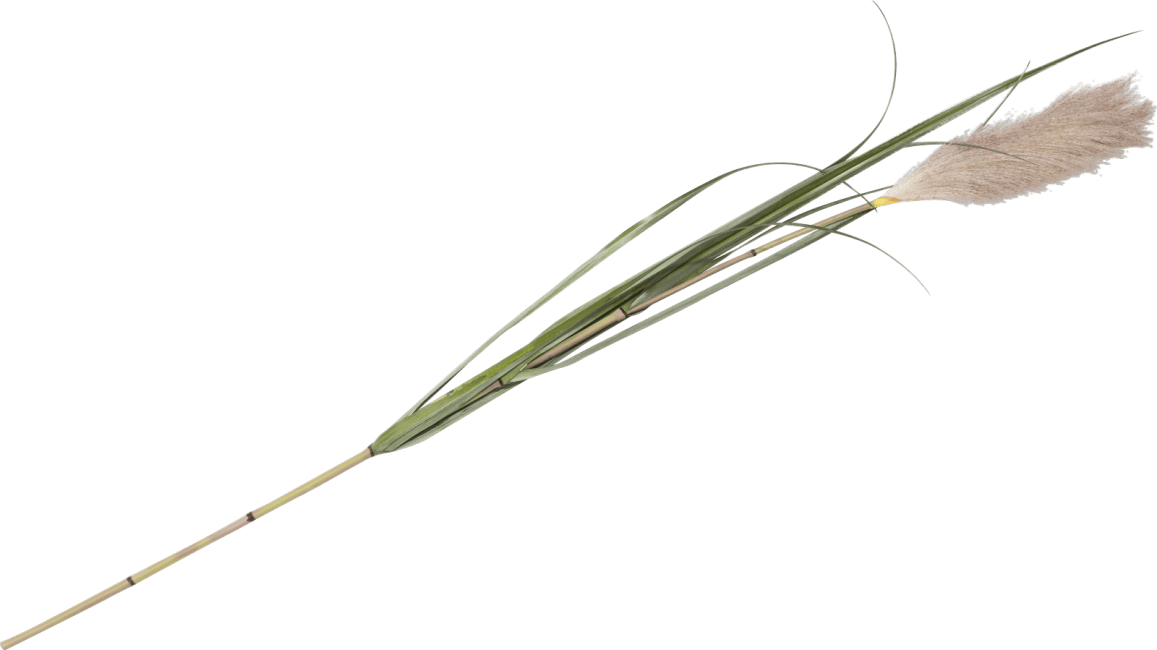 XOOON - Coco Maison - pampus grass artificial flower h120cm