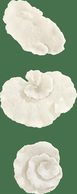 Happy@Home - Coco Maison - coral set van 3 wandobjecten