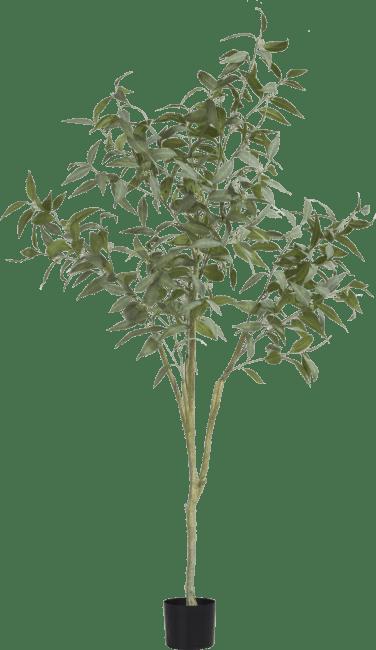 XOOON - Coco Maison - eucalypthus tree plant h195cm