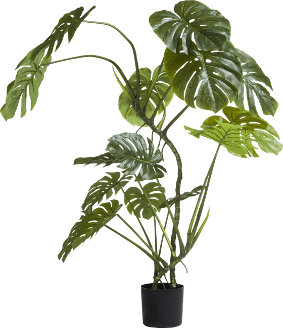 XOOON - Coco Maison - monstera on trunk - 150 cm