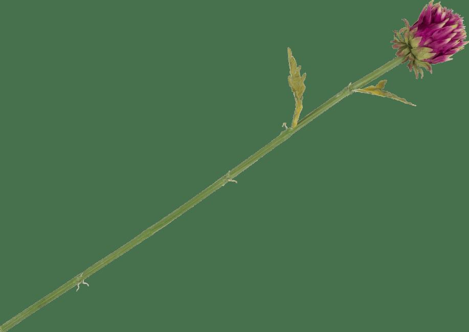 XOOON - Coco Maison - artichoke stem - 80 cm