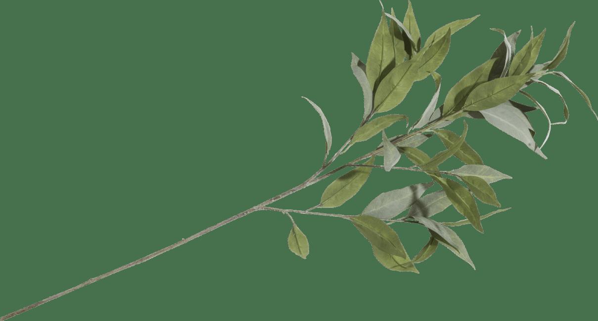 XOOON - Coco Maison - eucalypthus spray h93cm