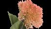 XOOON - Coco Maison - sedum branch artificial flower h43cm