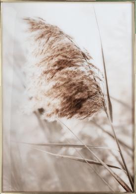 breeze b bild print 70x100cm