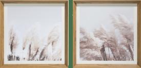 pampas set of 2 photo prints 50x50cm