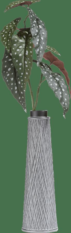 begonia maculata spray - 90 cm