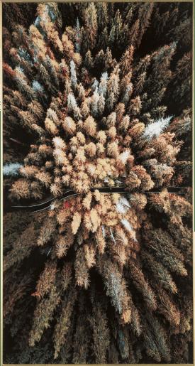 decoration murale pine woods - 80 x 150 cm - empreinte sur verre