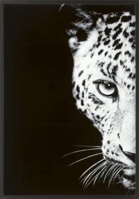 decoration murale cheetah - 70 x 100 cm - empreinte sur verre