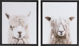 painting alpaca and sheep - 2 pieces - 50 x 60 cm - print on glass