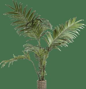 kentia palm h180cm