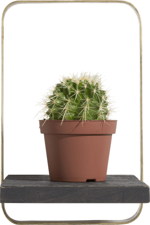 rosetta wandrek 35x22cm
