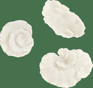 wanddekoration coral - set von 3