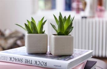 Pot DOTS van COCO maison is een stoere pot door zijn rechthoekige vorm en de neutrale witte kleur. Pot DOTS is van keramiek en heeft een heel fijn stippenmotief op de gehele buitenzijde. DOTS is 8 cm hoog en heeft ook een diameter van 8 cm. DOTS is daarmee heel goed te gebruiken als kleine bloempot.